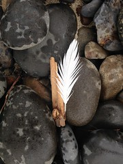 Feather and Flotsom on the Rocks (malchats) Tags: driftwood feather oregon oswaldweststatepark rain rocks shortsandsbeach smugglercove wood