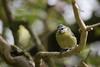 Birds (DJWGA) Tags: oostvaarderplassen