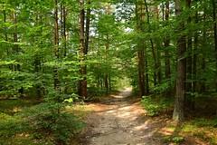 summer moods (JoannaRB2009) Tags: summer mood forest woods nature green light shadow tree trees path sand sandy sunlight sunlit jura jurakrakowskoczęstochowska polska poland