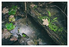 Driftwood (Eckehard Straßweg) Tags: fujifilmxt2 fujinonlens nature natur water wasser creek bach holz treibholz leave laub light licht shades schatten outdoor forest wald wood