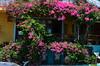 taverne, Agios Nikolaos (Dvid7) Tags: taverne flowers agios nikolaos crete krit kreta greece grčka