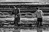 Battre les poches (Fabrice Denis Photography) Tags: seascapephotography france pointedelafumée blackandwhite charentemaritime coastalphotography blackandwhitephotography monochromephotography sea nouvelleaquitaine seascapes atelierphotobalades seascapephotos ocean blackwhitephotos bwphotography ostréiculture coastal oceanphotography fouras seascapephotographer monochrome fr noiretblanc