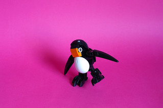 Noot, the Ko-wahi penguin  (Bio-cup 2017)