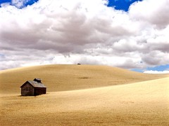 Simple setting that caught my attention (In explore September 3,2017) (christinachui79) Tags: outdoor outdoors nature beautiful cloud photography flickr autumn fall harvest hills sky tranquil tranquilty calm palouse wheatfield wheatland field landscape clouds lines peace scenery scenic