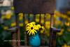 The Kindness Of Strangers (jah32) Tags: flowers flower flora flowerscolors yellow yellowflowers cmwdyellow blue vase chairs chair highchair summer summertime summercolours summercolour inmybackyard inthegarden kindness kindnessofstrangers payitforward colour color colours colors bokeh