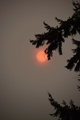 Blaze of Orange Sunrise (~~J) Tags: fire orange sunrise smoke tree sad forestfire stateofwashington oregon california