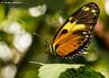 Butterfly Bokeh (JKmedia) Tags: butterfly bokeh boultonphotography wales insect macro closeup pattern texture probosis 15challengeswinner