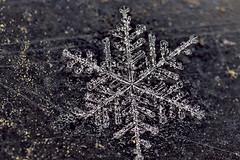_K4A6546acdsmsi mn (eslingermj) Tags: mjeslinger mjesli eslingermj macro macrouniverse macroscopic macros macrosnowflakes macroextreme extrememacro extremecloseup crystals snowcrystals canon winterwonderland wintery