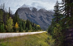 A Road Through the Mountains (Yoho National Park)