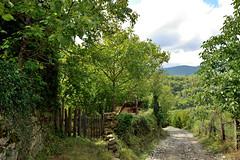 Bakırlızaviye Köyü (esercakarlar) Tags: nature village bakırlızaviye sinop turkey landscape travel