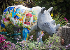 Proud -) (S's images) Tags: devon brixham harbour holiday september relaxing sunshine pride rhino garden