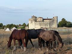 De beaux chevaux ... près de quel château? celui de de Saint-Jean-d'Angle (17). (Marie-Hélène Cingal) Tags: france