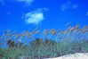 On The Way To The Beach (mialilly234) Tags: sky clouds nature sand beach blue myrtlebeach shoreline southcarolina nikon nikond40 d40 travel vacation