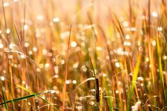 _DSC7769 Fall Marsh (Charles Bonham) Tags: wetlands marsh cattails reeds fall color reflections aperturerings bokeh backlight weeds outdoor depthoffield sonya7rll charlesbonhamphotography hss sonyfe100400mmgmoss