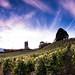 Vineyards of Savoy
