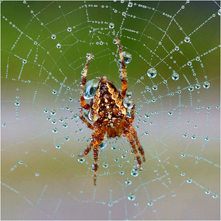 the spiders web..........