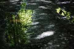 wet (hansekiki ) Tags: rügen jasmund wald nationalpark baum bäume trees canon 5dmarkiii