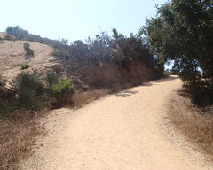 019 Leaving The Shade (saschmitz_earthlink_net) Tags: 2017 california topangacanyon statepark losangeles pacificpalisades losangelescounty santamonicamountains hike hiking road easttopangafireroad tree
