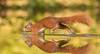 Crossing the pond quickly (Kees499  Nature pics) Tags: redsquirrel eekhoorn eichhörnchen keesmolenaar nature water running d500 200500vr nikon holland mammal wetfotohutdrunenhide explore explored myexplore sciurusvulgaris