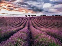 P6300036-Edit (Michele Magi) Tags: landscape outdoor provence provenza lavanda panorama vallensole