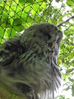 Marwell Zoo