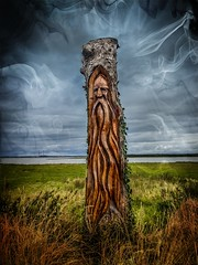 Viking tree, Ballylongford County Kerry (To see a World in a Grain of Sand And a Heaven in ) Tags: smartphotoeditorstudio1 hdr htcu11 ballylongford countykerry ireland viking tree