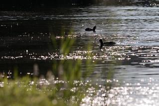 Al lago di Viverone