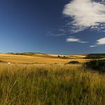 Benholm landscape. thumbnail