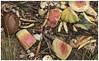 Compost #2 2017; Fruits & Veggies (hamsiksa) Tags: stilllife plants fruits vegetables compost foundstilllife color watermelon carrots squash