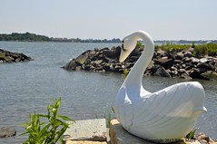 Swan's View (Trish Mayo) Tags: swan planter swanplanter clasonpoint eastriver bronx notrealanimals