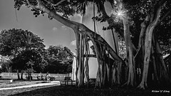 Underneath the Lighthouse by Hemingway's House @ Key West (Thank you, my friends, Adam!) Tags: gallery fine art photography adamzhang orlando lakemary nikkor wideangle lenses standard telephoto super closeup zoom ngc 漂亮 nikon dslr 长焦 长焦镜头 尼康 镜头 中佛州 保护区 单反 lens central florida photographer excellent interesting explore fun nice unique hemingway keywest hemingwayshouse lighthouse 灯塔 海明威