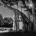 Underneath the Lighthouse by Hemingway's House @ Key West thumbnail
