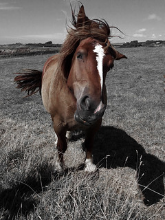Le cheval de ma soeur