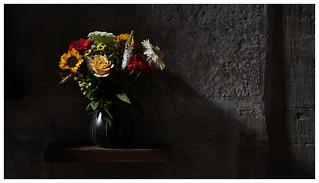Blumen für Severi, Severikirche, Erfurt, August 2017