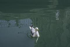 Gabbiano (lonigropatrik2051) Tags: venice gabbiano seagull italy