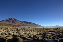 llamas & co (Blue Spirit - heart took control) Tags: llama mountain bolivia paesaggio cielo blue sky