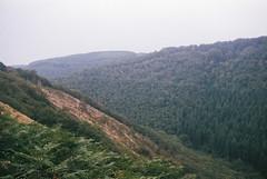 Teign Valley 3 (avenwildsmith) Tags: film 35mm nature devon countryside landscape analog analogue kodak retinette 1b grain england britain wild wilderness teign valley 35mmfilm kodakretinette1b
