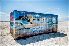 Support Beach Wildlife Conservation (Nikographer [Jon]) Tags: lidobeach nickersonbeach supportwildlife conservation 20170819d810077021 d810 hdr summer aug august plover chick art painting shippingcontainer