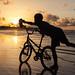 BMX Beach Boy