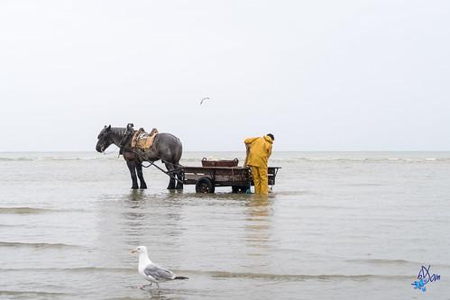 2017 - Pêche à la crevette - Oostduinkerke