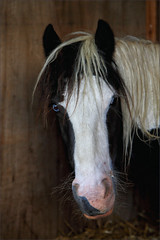 Gabriel V (meniscuslens) Tags: rescue pony skewbald blue stable horse trust buckinghamshire charity