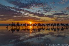 Camel Safari at sunset (SarahO44) Tags: bilingurr westernaustralia australia au cable beach camel safari blue sunset reflection clouds broome western ocean landscape camels ride