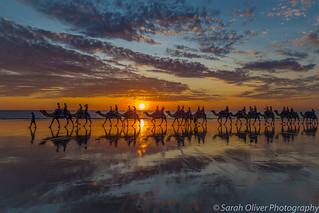 Camel Safari at sunset
