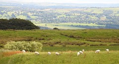 The journey (Lancashire Lass :) :) :)) Tags: quote countryside landscape summer sheep fields meadows trees woods villages august