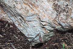 Metcalf Phyllite (Neoproterozoic; Laurel Creek Road outcrop, Great Smoky Mountains, Tennessee, USA) 14 (James St. John) Tags: metcalf phyllite phyllites metamorphic rock rocks metamorphics snowbird group ocoee supergroup precambrian proterozoic neoproterozoic laurel creek road great smoky mountains national park appalachians appalachian tennessee