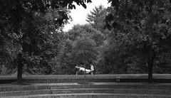 Die Stunde da wir nichts voneinander wußten (Cozla) Tags: black white blackandwhite couple two symmetry geometry nature lines park münchen