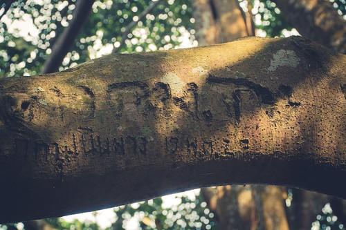 ramkhamhaeng national park - thailande 25