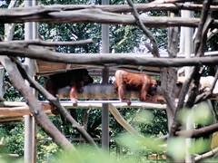 1994_Singapore_2016-07-18_Photo_239 (Matthias & Paula) Tags: singapore sentosa kuala lumpur malaysia cameron highlands zoo japanese gardens