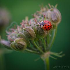 Beetle @ a flower