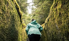 Conditionnement (La caverne aux trésors) Tags: potofgold naturelover nature naturewatcher frombelow belowpov below pov moss forest hiking trails hike hikingtrails lacaverneauxtresors